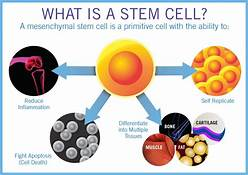 Stem Cell Therapy for Aging, Could This be the Magic Bullet?