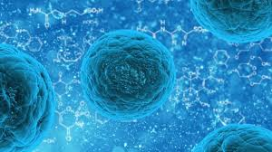 Stem Cell Therapy for Aging